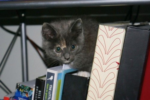 Lucy the kitten