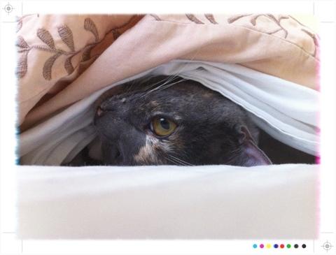 A kitten peeking out of a blanket.